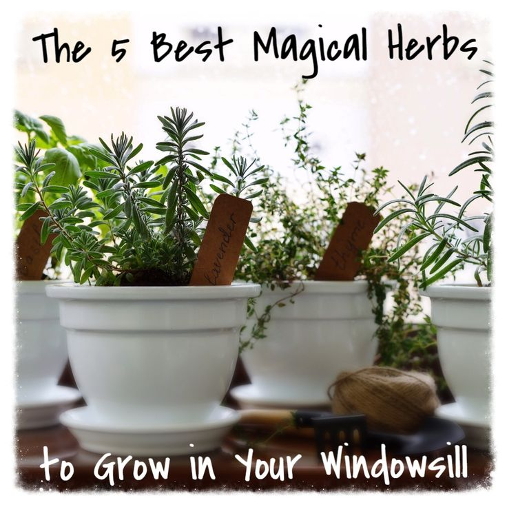 The 5 Best Magical Herbs You Can Grow in Your Windowsill