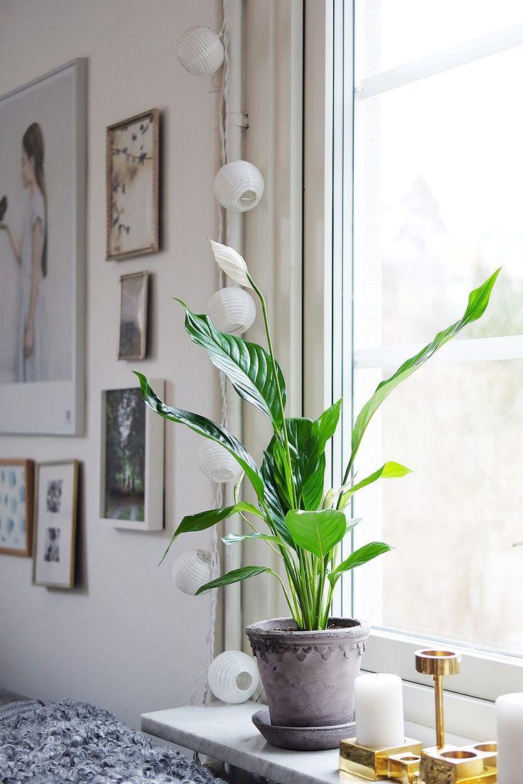 10 krukväxter som tar hand om  gifterna i ditt hem.