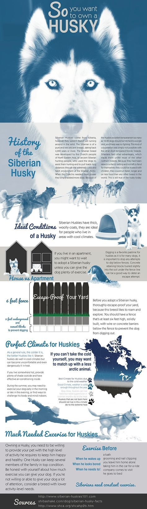 """Owning a husky is not an easy task. An infographic was created to educate new husky owners on how to raise their new family member. A duotone color scheme is used on the pictures to give a consistent look. """"Save A Husky, Educate Yourself"""" is an ad campaig…"""
