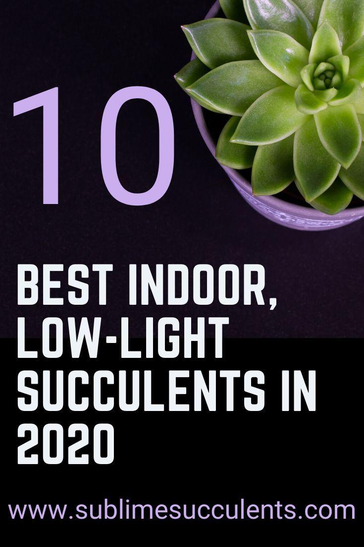 10 Best Indoor Low Light Succulents In 2020 Low Light Succulents Low Maintenance Indoor Plants Low Lights