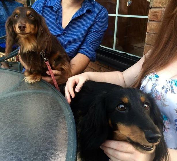 Sandstone Grillhouse in Niagara Falls, ON, is Dog-Friendly!