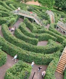 The Maze at Escot, great fun, you can watch the kids from the viewing platform