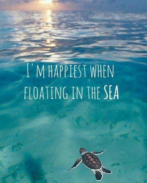 Latest 80 Awesome Beach Quotes For Summer 6