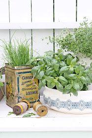 Nå er virkelig urte sesongen   i gang...og jeg planter   gjerne noen urter i kasser   men helst liker jeg mine urteplanter   i GAMMELT G...