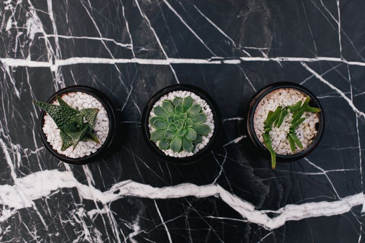 Great way to use your finished Golden Skull Candles http://goldenskullcandles.com/shop  #candle #candles #soywaxcandles #marble #luxury #gsc #golden #skull #goldenskullcandles #succulent #succulents #design #marble #interior #gardening #plants #potplants