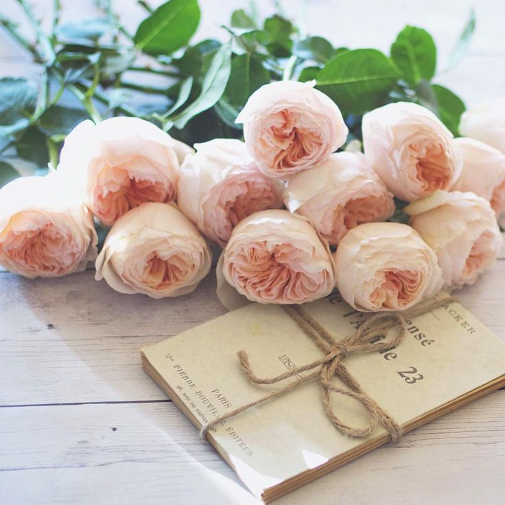 I love these David Austin Juliette roses.