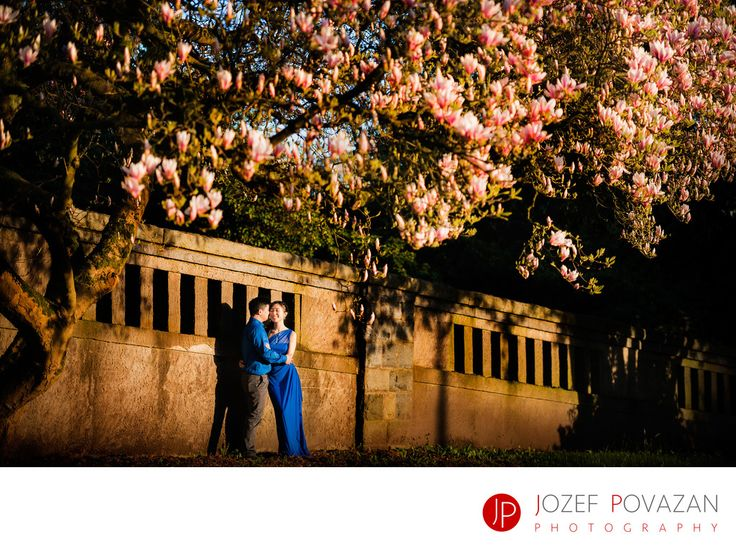 Best Award winning Vancouver wedding photographers Povazan Photography - Best Vancouver engagement locations for cherry blossoms: Best Vancouver engagement locations for cherry blossoms photographed by Jozef Povazan Photography. Award winning photographer with modern and creative feel to his storytelling.&nbsp, Location: Stanley Park, Vancouver, BC.
