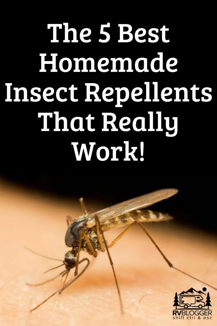 5 best homemade insect repellents that work rvblogger