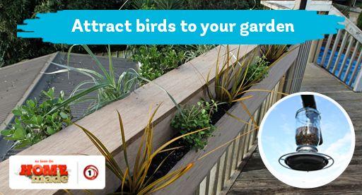 Tui Garden | Wild Bird Guide