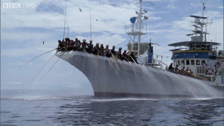 HD: Tuna Fishing - South Pacific - BBC Two