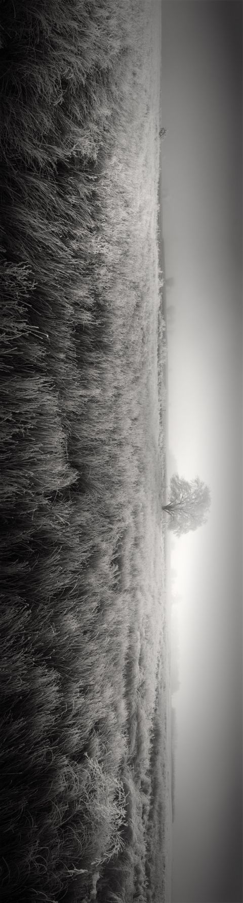 12 photos stitched together. I like the simplicity of this photo. It's as if I'm in that field looking at the tree.