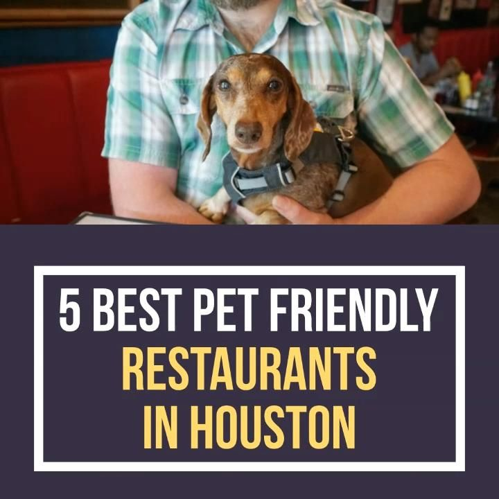 5 Best Pet Friendly Restaurants In Houston Lil Paws Video In 2020 Pets Dog Quotes Pet Travel Accessories