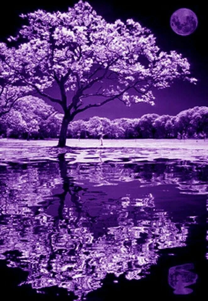 Beautiful Purple Tree and Moon