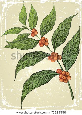 old-fashioned hand drawn coffee tree branch by mart, via Shutterstock