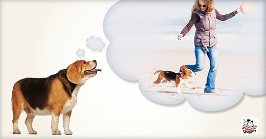 Dog walking: A life-long fitness partnership - Weight Waggers #dog #walk #health