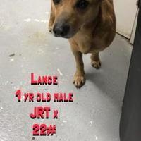 Fairfax Station, Virginia - Jack Russell Terrier. Meet Lance, a for adoption. https://www.adoptapet.com/pet/20952851-fairfax-station-virginia-jack-russell-terrier-mix