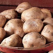 kennebec seed potato
