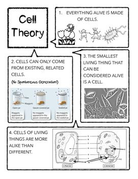 Cell Theory Printable