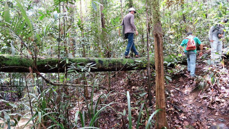 Trekking into the Amazon Jungle