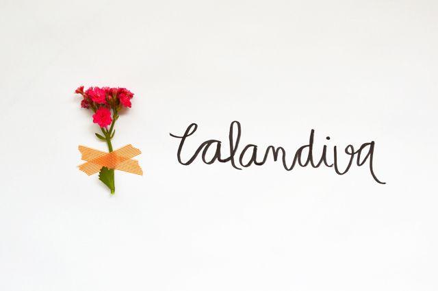 Floriografia: Calandiva  http://www.farmrio.com.br/adorofarm/floriografia-calandiva/