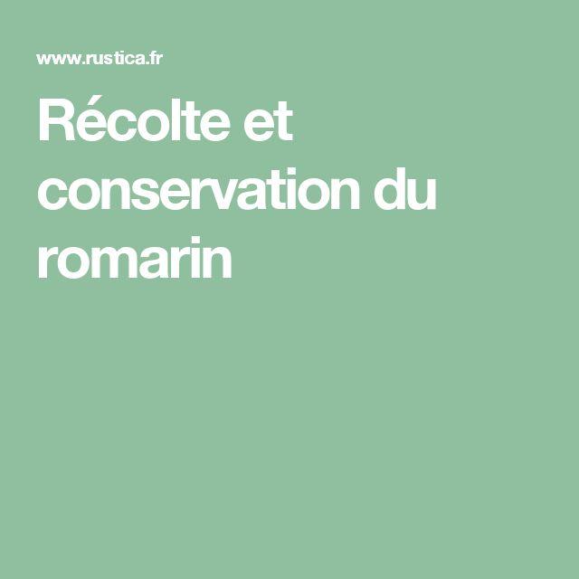 Récolte et conservation du romarin