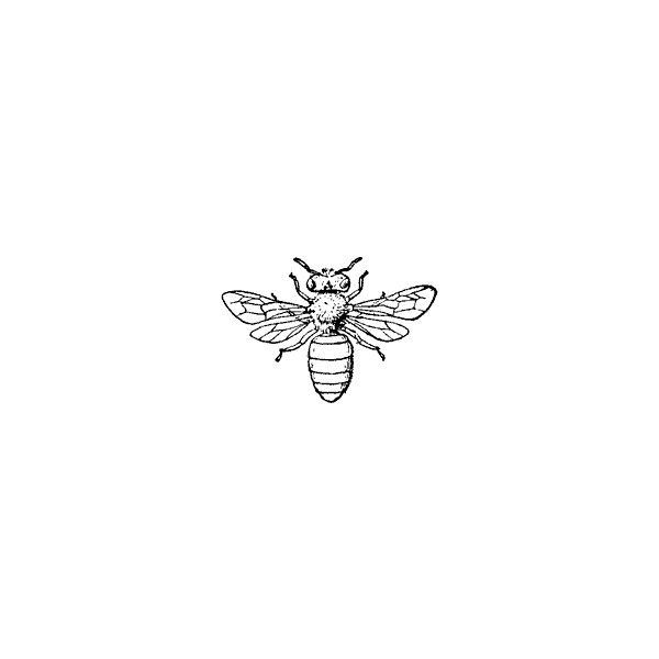 Honey-bee Clipart found on Polyvore
