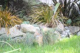 tussock garden - Google Search