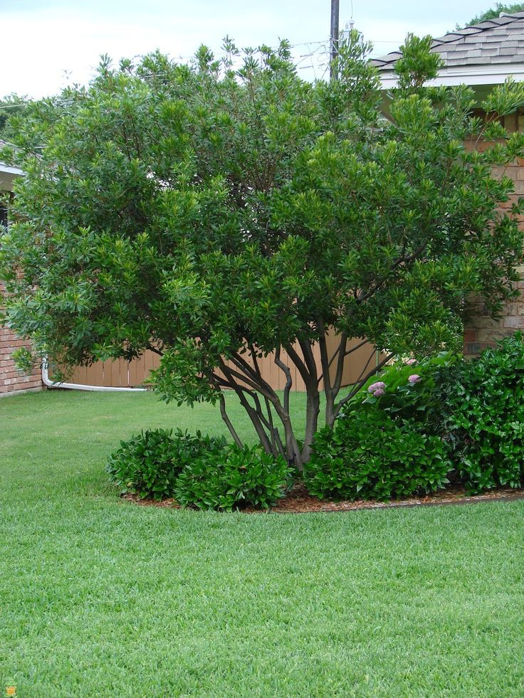 Image gallery small trees for Garden trees for shade