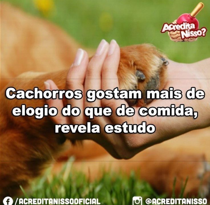 MEU BEBÊ LINDO! ❤❤ #cachorro #cachorroterapia #cachorroetudodebom #caopanheiro #filhode4patas #maedecachorro #paidecachorro #segundafeira #lhasaapso #shihtzu #schnauzer #pug #labrador #luludapomerania #golden #bulldog #bulldogfrances #bulldogingles #viralata #petshop #petmeupet