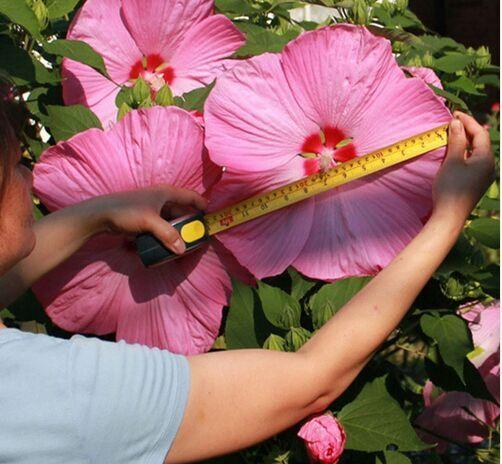 50 Deeltje/bag Giant Hibiscus Zaden Hardy, Mix Kleur, DIY Thuis Tuin Ingemaakte Bloem Plant, Gratis Verzending * bonsai Biologische