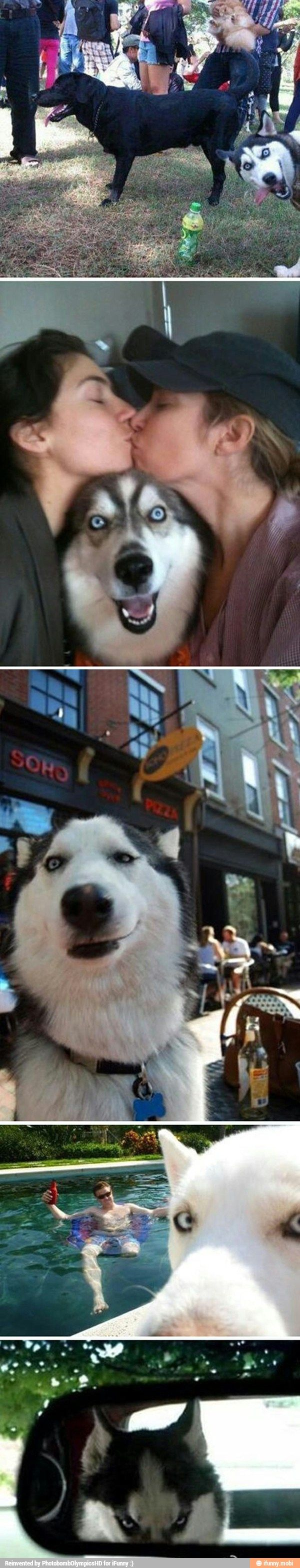 Man's best friend...and photobomber :)