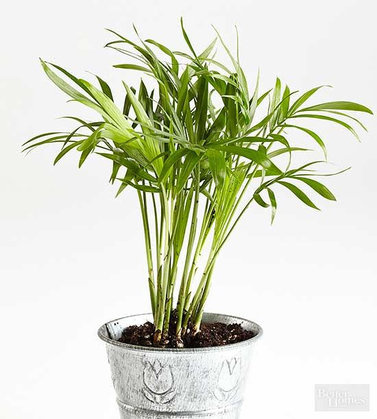 how to add humidity for indoor plants