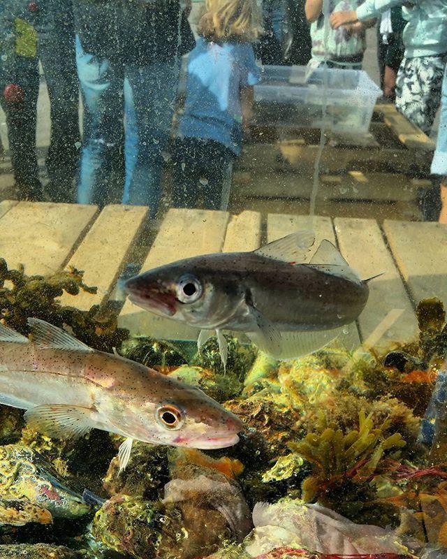 Best Ideas About Aquariums Uk On Pinterest Aquarium Ideas