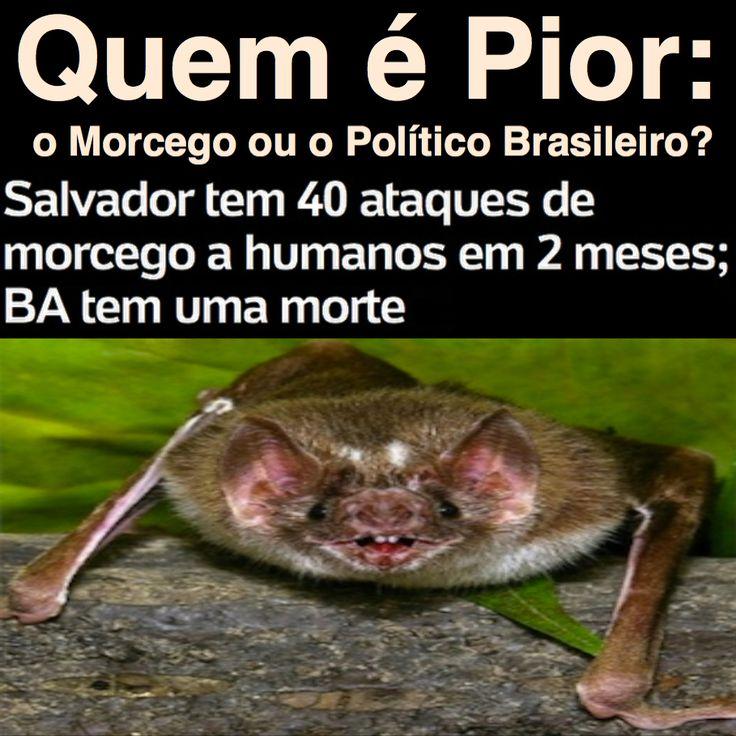 Quem é Pior: o Morcego ou o Político Brasileiro? [UOL] https://noticias.uol.com.br/ultimas-noticias/agencia-brasil/2017/05/17/aumentam-casos-de-ataques-de-morcego-a-humanos-em-salvador.htm ②⓪①⑦ ⓪⑤ ②⓪