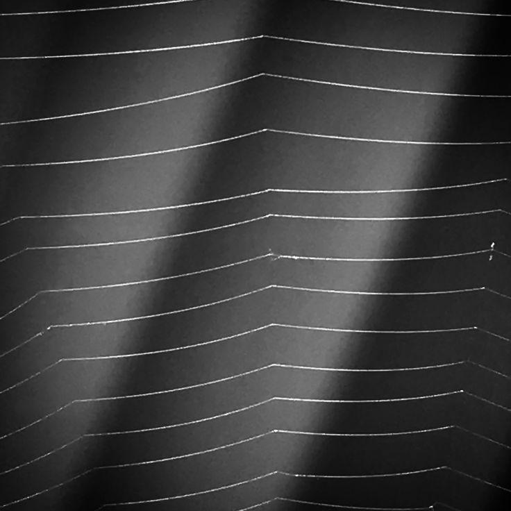 Spider web 🕷🕸