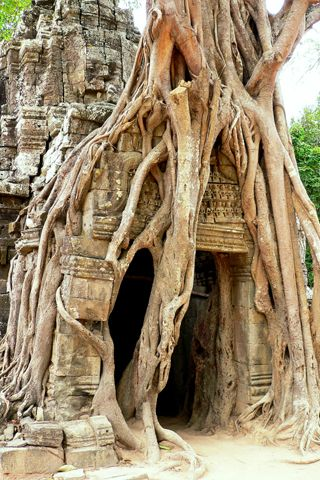 It's amazing to think that the temples are so ancient, trees are growing over them!