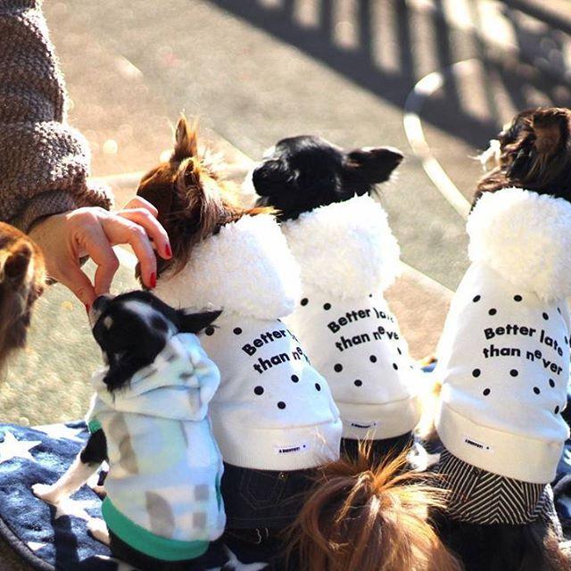 * 撮影中に思うこと  撮影に付き合ってくれる この仔たちの健気さがたまらん♡♡♡ *  おやつパワー✨が大半を占めている …だなんて思ってないからねっ!(笑) * * @yuu_yuuto ちゃんphoto✨ *  #Chihuahuas #instachihuahua #kawaii #instadog #doglove #Chihuahuapuppy  #chihuahua #wanko #dogstagram #吉娃娃 #ig_dogphoto #dogbaby #dogpuppy #치와와  #Chihuahuababy #舌チロ部 #パピー #チワワ #ブラックタン #子犬 #canon #愛犬 #多頭飼い #タレ目 #チョコタン #親バカ部 #後ろ姿フェチ #下町散歩