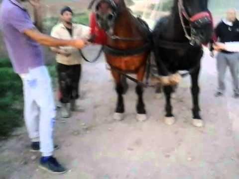 caii lu alex hoghilag - YouTube