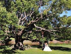 Garden Setting wedding venue on the goldcoast! Visit our website for venue info! Www.allaboutvenues.com.au