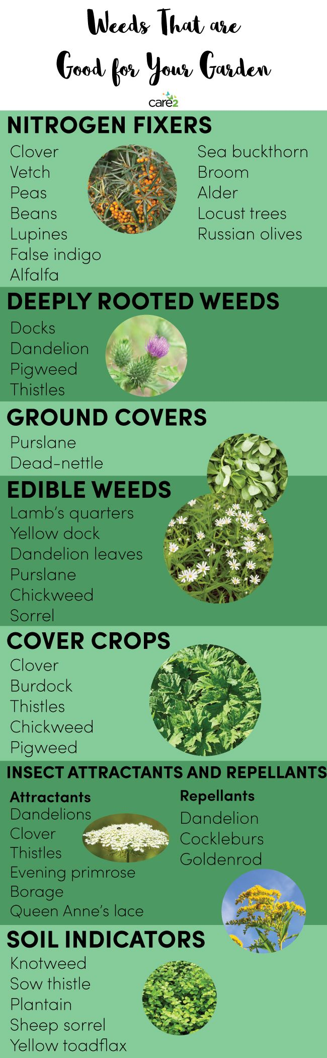 Weeds That Are Good for Your Garden                                                                                                                                                     More