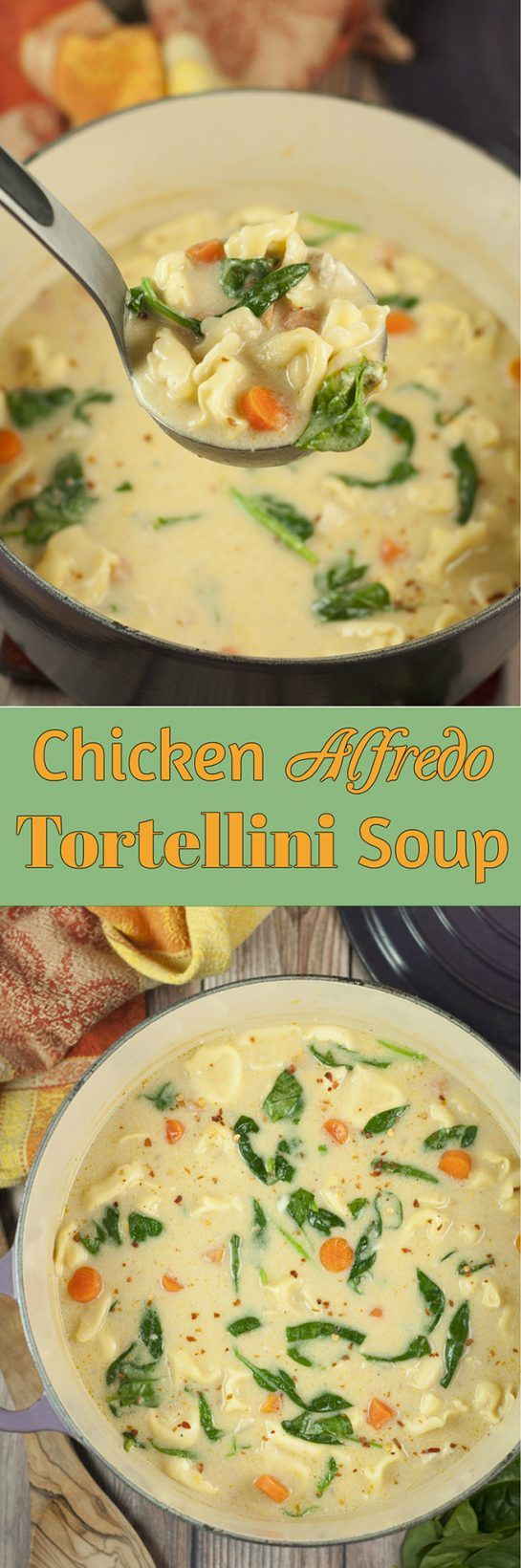 Easy 30 Minute Chicken Alfredo Tortellini Soup where the flavors blend together so well everyone will be begging for seconds! The Parmesan Alfredo sauce is the special ingredient that makes this hearty soup rich and creamy. #soup #chicken #pasta #italian