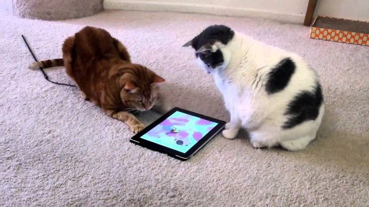 Animales Chistosos Jugando con Tablets. Recopilación Vídeos Divertidos