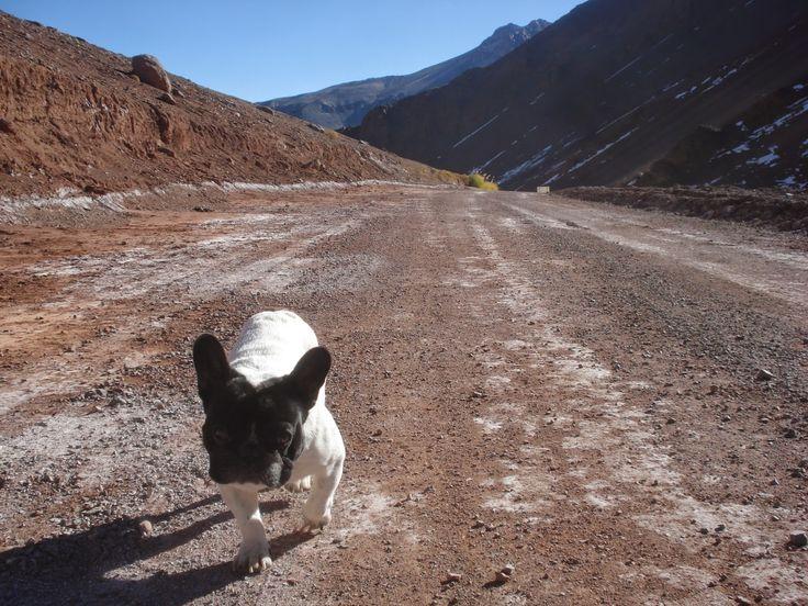 Atacama desert, just a piece of cake for the brave Sir Weedzy:)