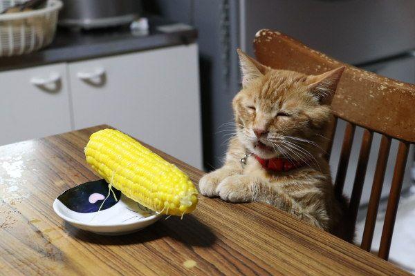 テーブルのとうもろこし - かご猫 Blog