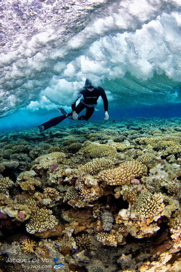 Blue Hole Divers, Coral reef - Dahab Egypt | by Jacques de Vos on 500px