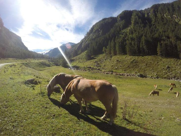 GenussWanderReise Pinzgau Neukirchen Großvenediger Nationalpark Hohe Tauern