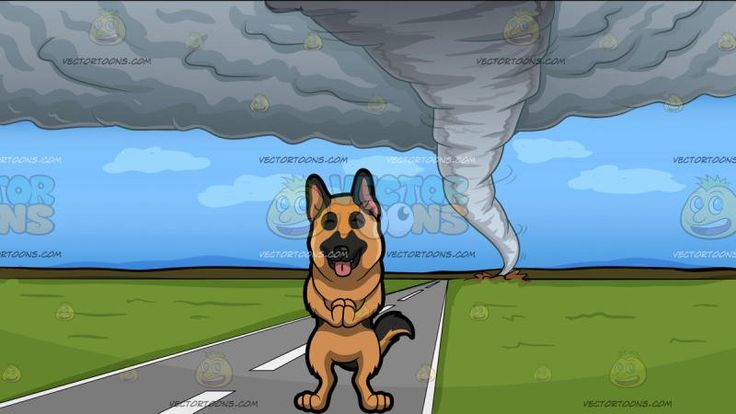 A Blissful German Shepherd With A Tornado Background:  A dog with golden brown and black fur pointed pink ears black muzzle and fluffy tail shuts its eyes parts its lips to reveal a pink tongue while bring together his front paws in front of his chest in excitement and A view of a tornado from afar destroying the green fields beyond the road from a distance