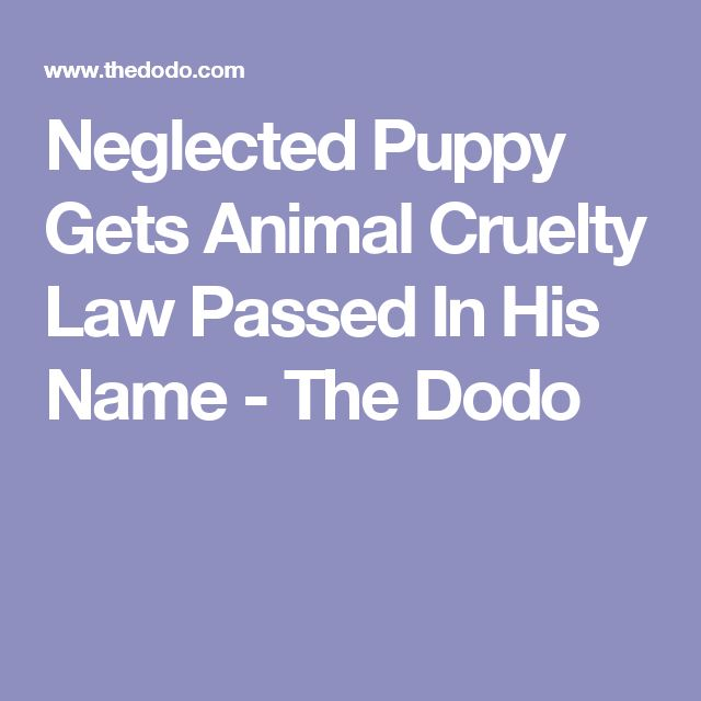 Neglected Puppy Gets Animal Cruelty Law Passed In His Name - The Dodo