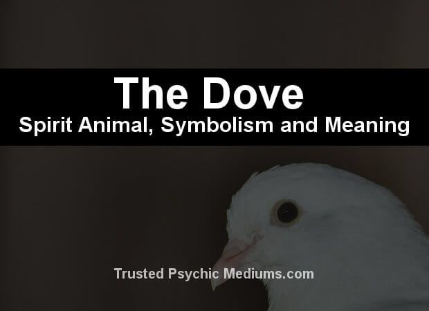 What does the dove spirit animal really mean? Find out the true meaning and symbolism of the dove in this special spirit animal analysis.