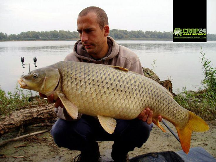 Simon cu unul dintre nenumaratii crapi comuni pe care i-a pescuit cu ocazia partidei de pescuit din Delta Dunarii